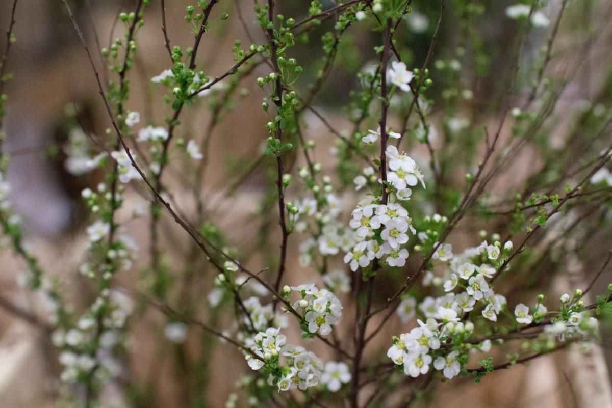 New Covent Garden Flower Market April 2016 Market Report Flowerona Hr 15