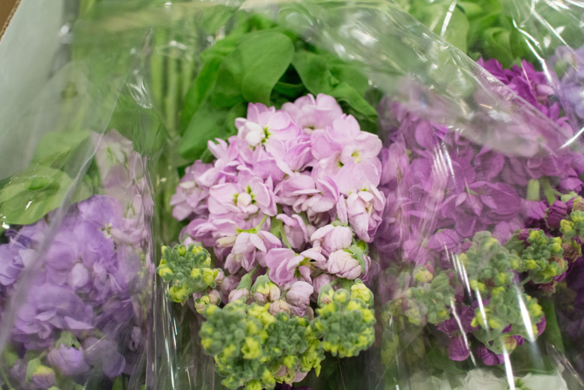 New Covent Garden Flower Market April 2016 Market Report Flowerona Hr 2