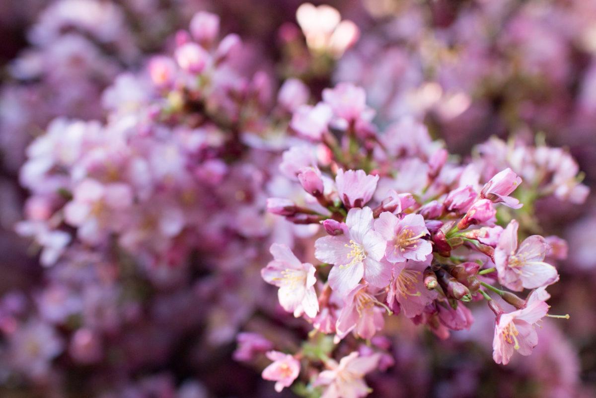 New Covent Garden Flower Market April 2016 Market Report Flowerona Hr 27