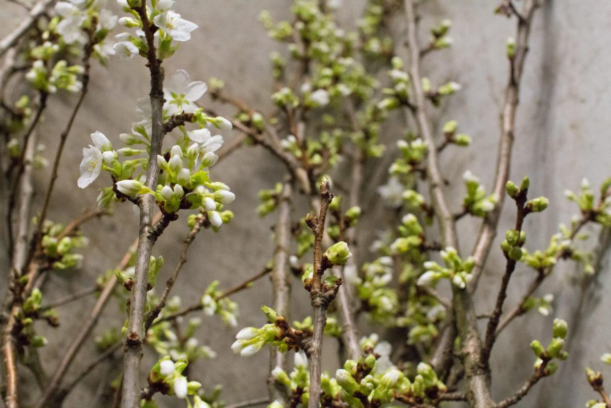 New Covent Garden Flower Market April 2016 Market Report Flowerona Hr 28