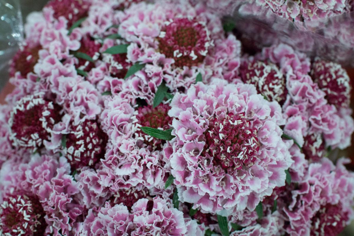 New Covent Garden Flower Market April 2016 Market Report Flowerona Hr 7