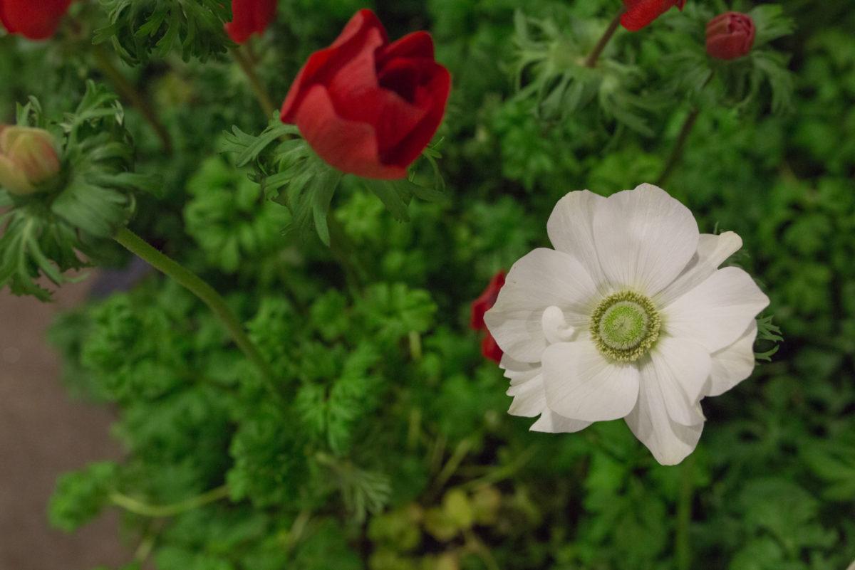 New Covent Garden Flower Market April 2017 Market Report Rona Wheeldon Flowerona Hr British Anemone Plants At L Mills