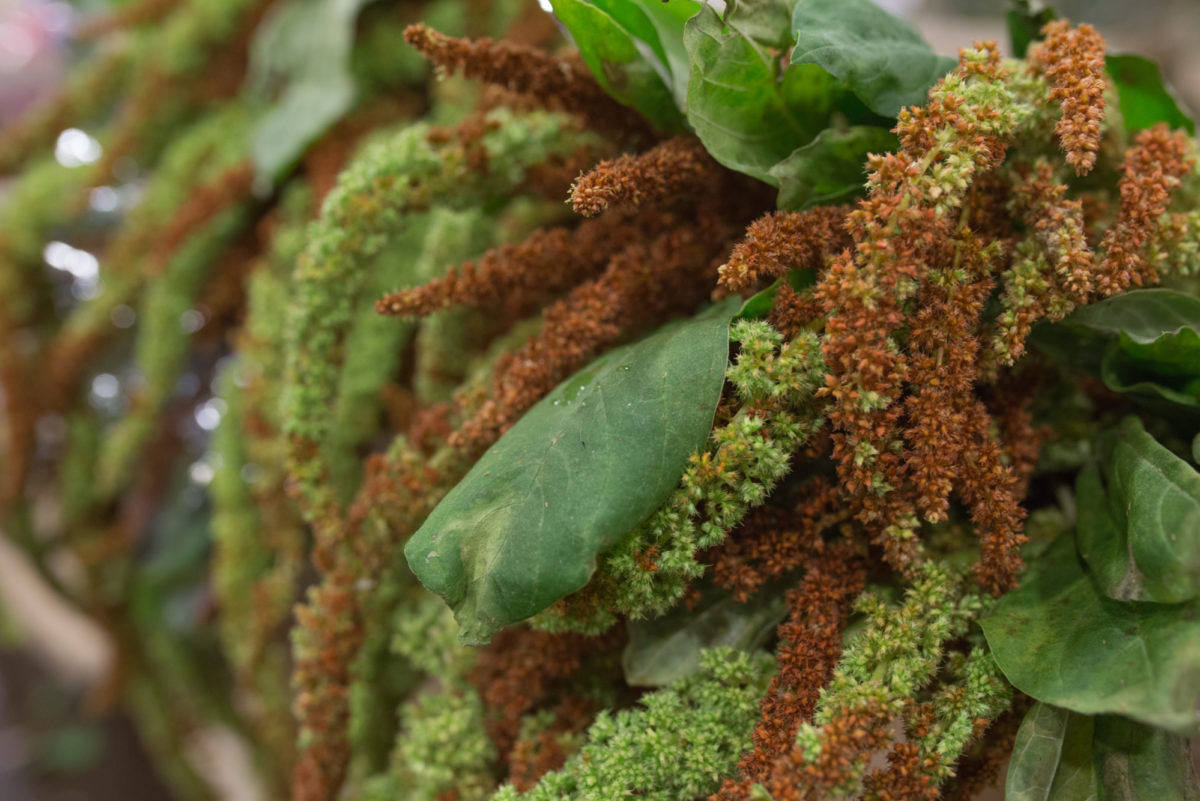 New Covent Garden Flower Market April 2017 Market Report Rona Wheeldon Flowerona Hanging Green Brown Amaranthus At Zest