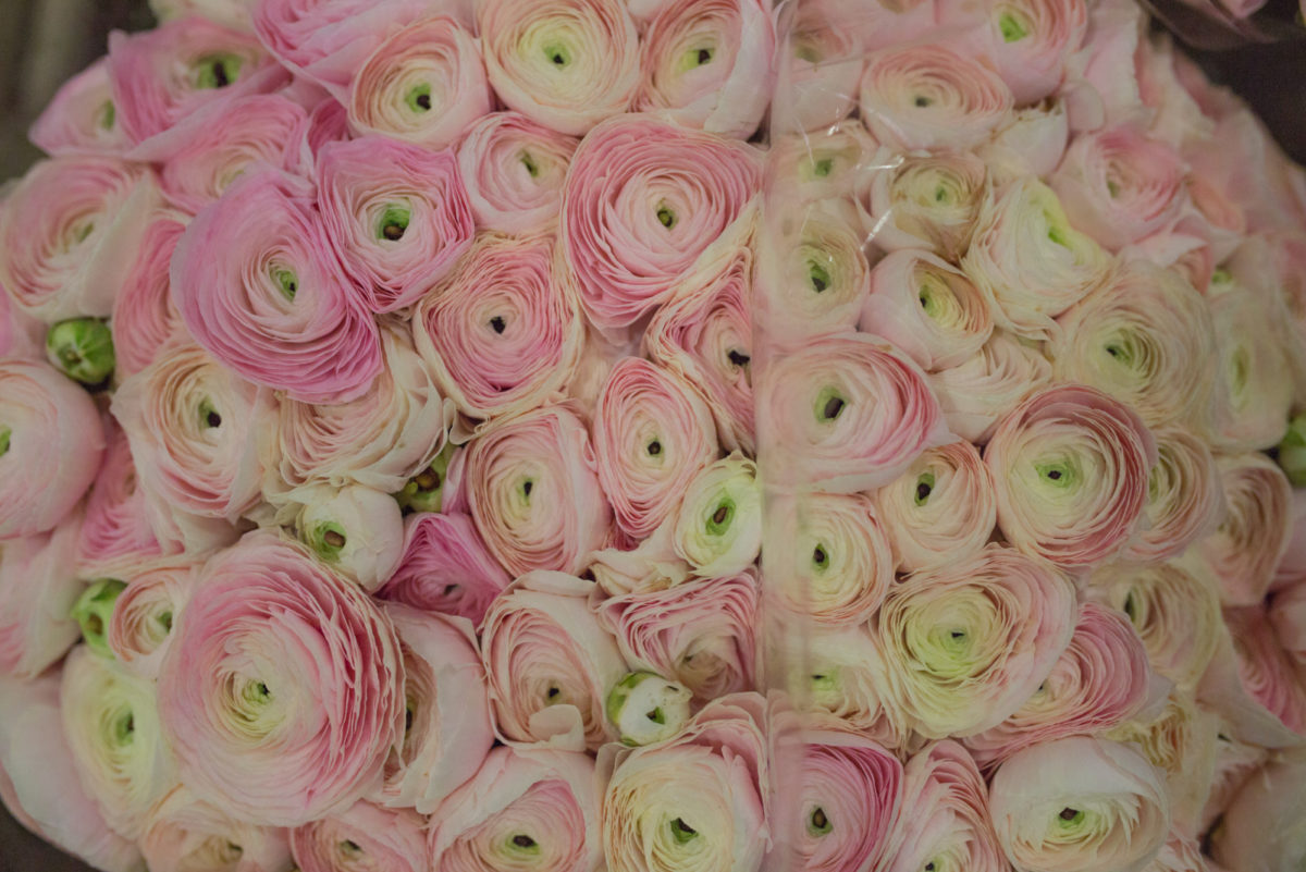 New Covent Garden Flower Market April 2017 Market Report Rona Wheeldon Flowerona Hanoi Cloni Ranunculus At Zest