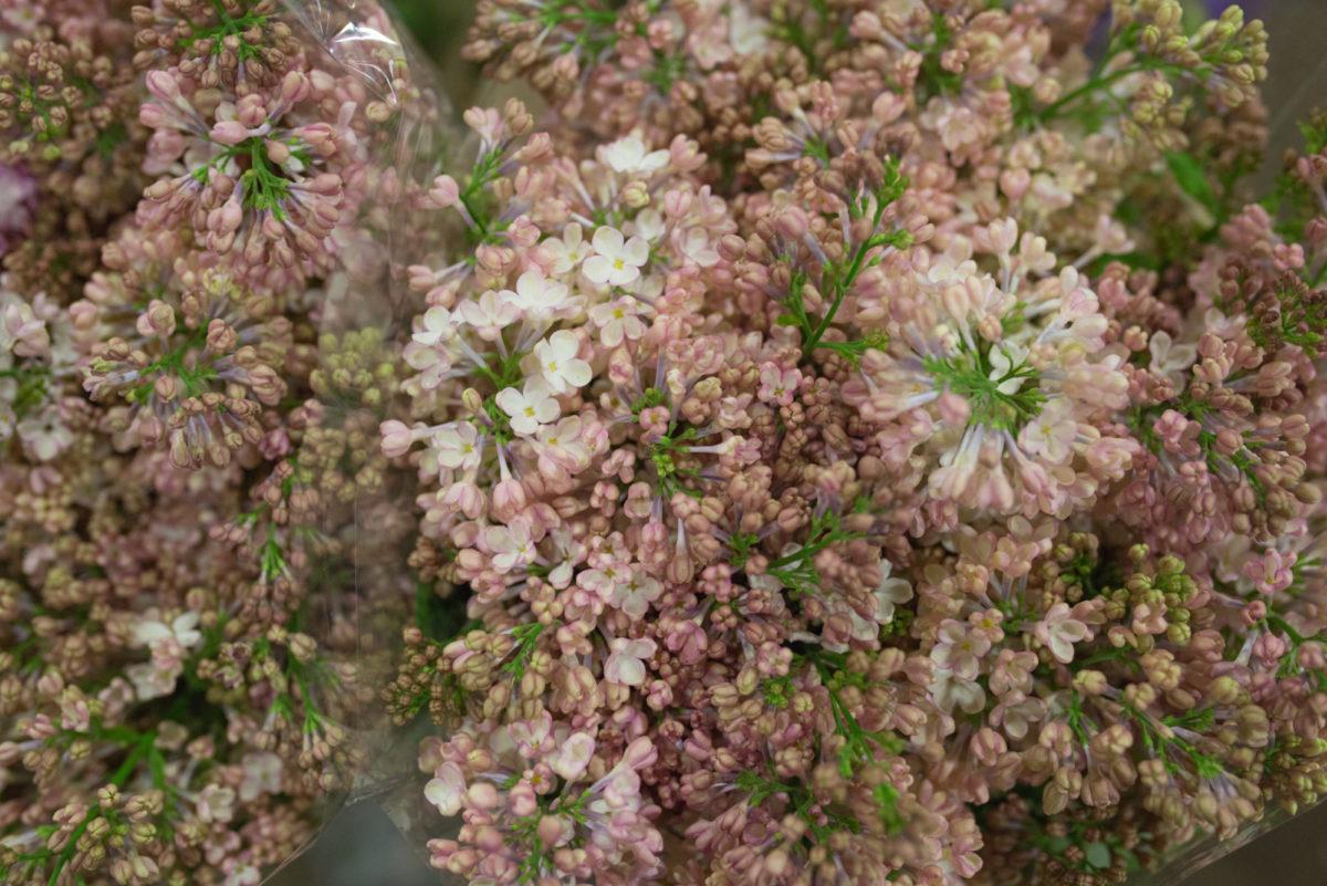 New Covent Garden Flower Market April 2017 Market Report Rona Wheeldon Flowerona Maidens Blush Lilac At Zest