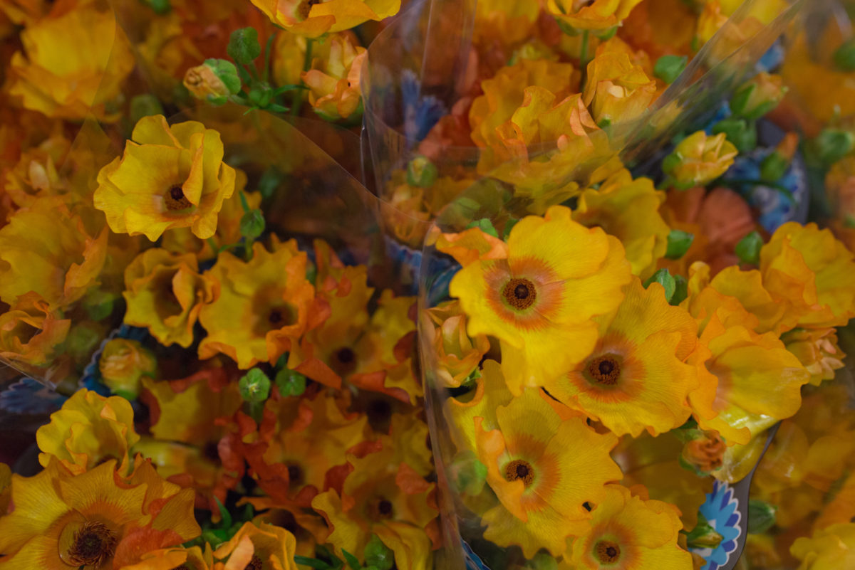 New Covent Garden Flower Market April 2017 Market Report Rona Wheeldon Flowerona Minoan Butterfly Ranunculus At Dg Wholesale