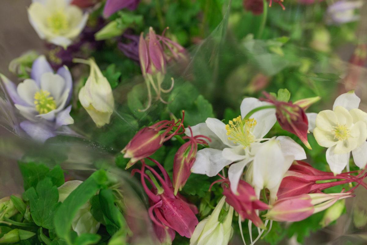 New Covent Garden Flower Market April 2017 Market Report Rona Wheeldon Flowerona Acquilegia At Bloomfield