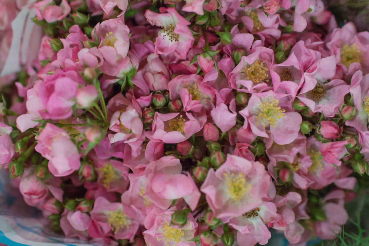 New Covent Garden Flower Market August 2016 Market Report Flowerona Hr A 35