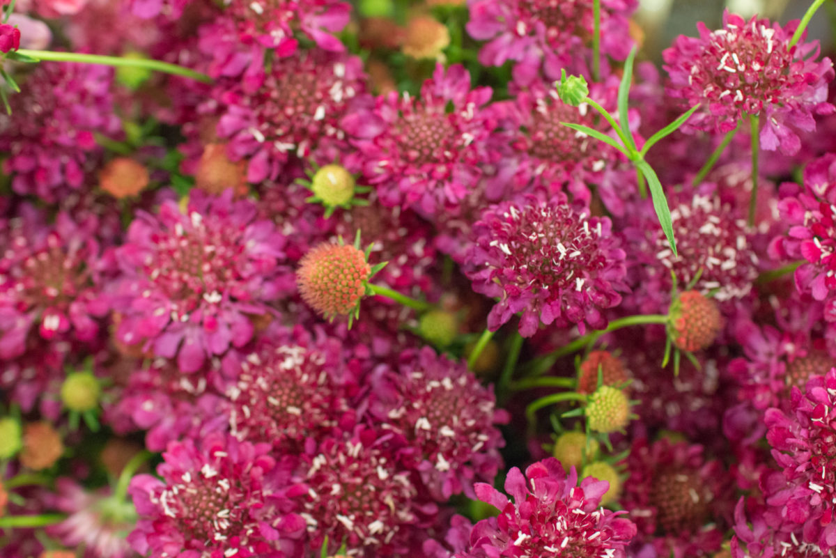 New Covent Garden Flower Market August 2016 Market Report Flowerona Hr A 40