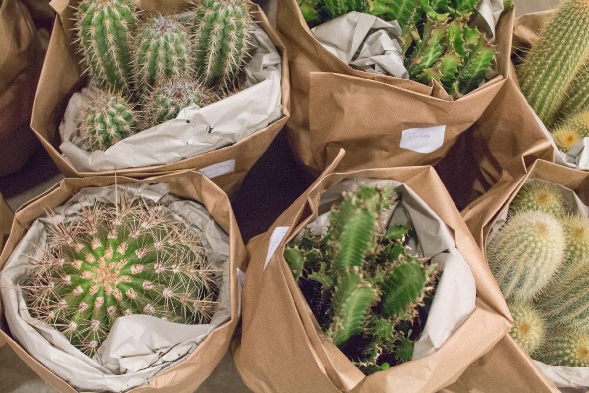 New Covent Garden Flower Market August 2016 Market Report Flowerona Hr A 48