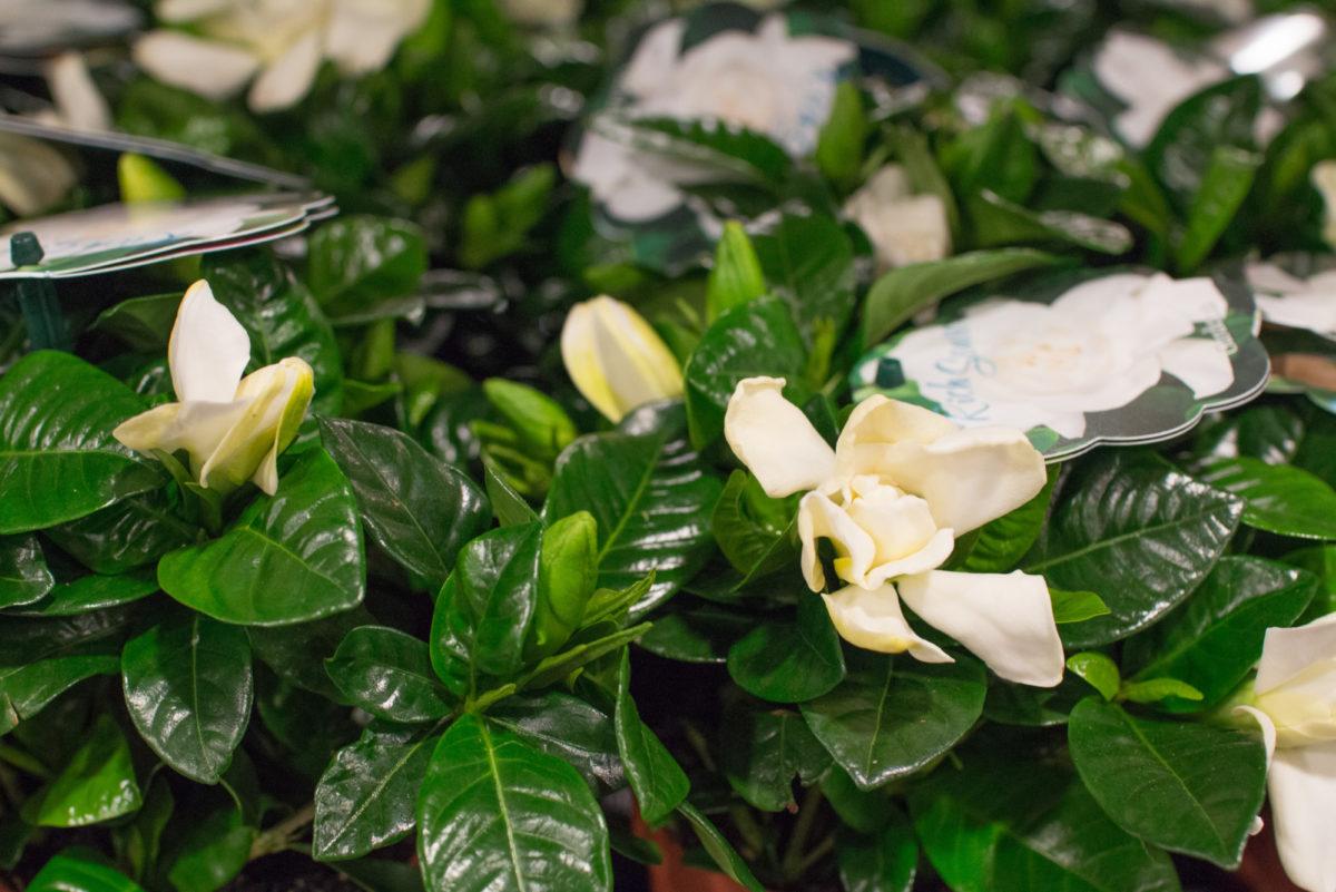 New Covent Garden Flower Market August 2016 Market Report Flowerona Hr A 7