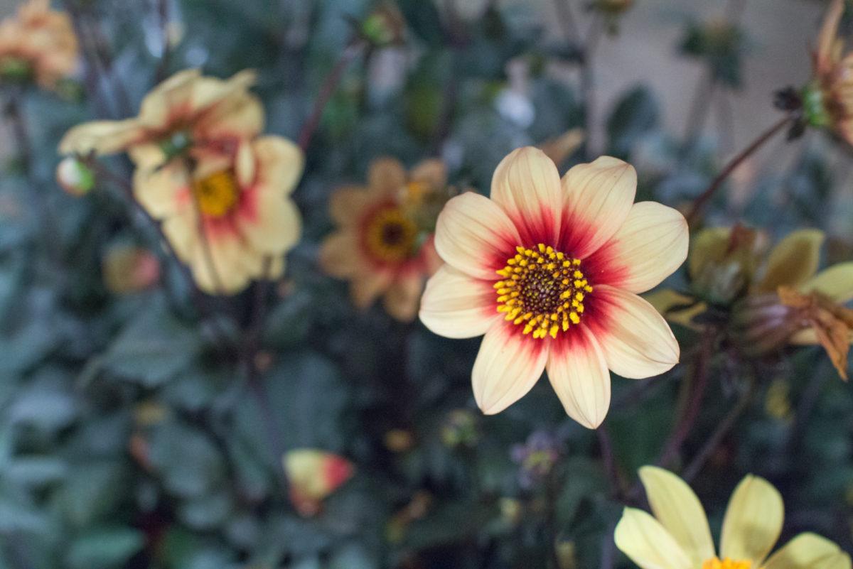 New Covent Garden Flower Market August 2016 Market Report Flowerona Hr A 9