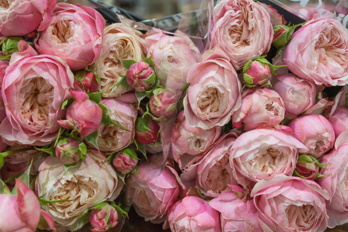 New Covent Garden Flower Market August 2017 Flower Market Report Rona Wheeldon Flowerona Ôçÿ Victorian Classicôçö Spray Roses At Bloomfield 15