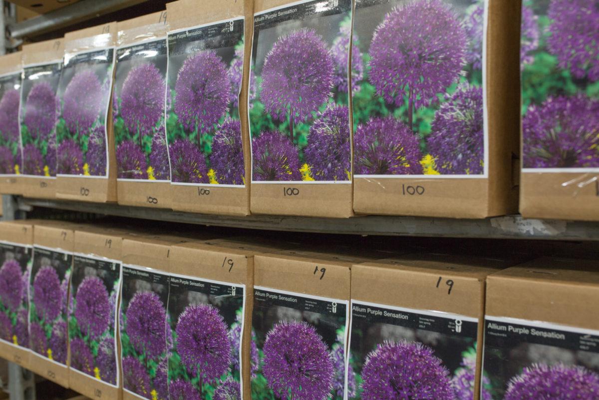 New Covent Garden Flower Market August 2017 Flower Market Report Rona Wheeldon Flowerona Allium Bulbs At Evergreen 26