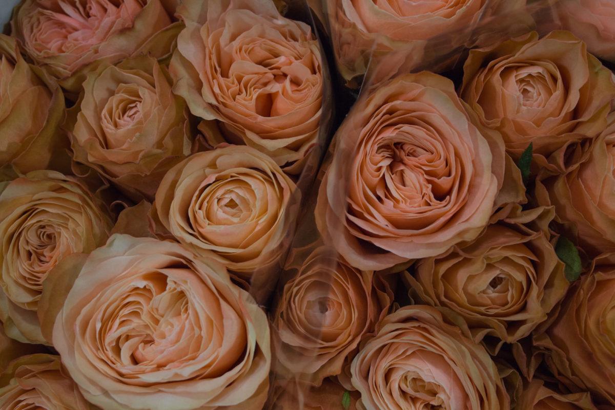 New Covent Garden Flower Market August 2017 Flower Market Report Rona Wheeldon Flowerona Kahala Roses At Bloomfield 10