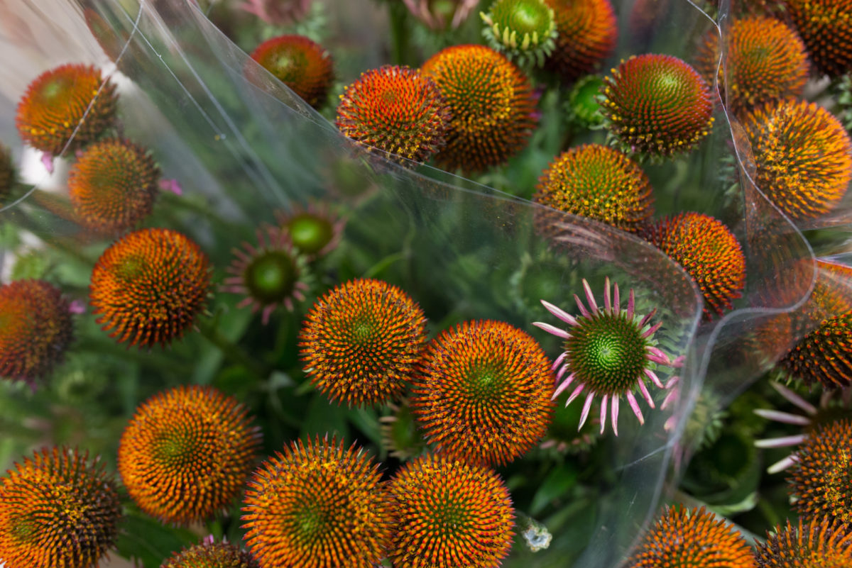 New Covent Garden Flower Market August 2017 Flower Market Report Rona Wheeldon Flowerona Rudbeckia At Dg Wholesale Flowers 9
