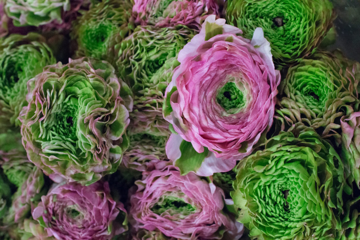 New Covent Garden Flower Market February 2016 Market Report Flowerona Hr 12