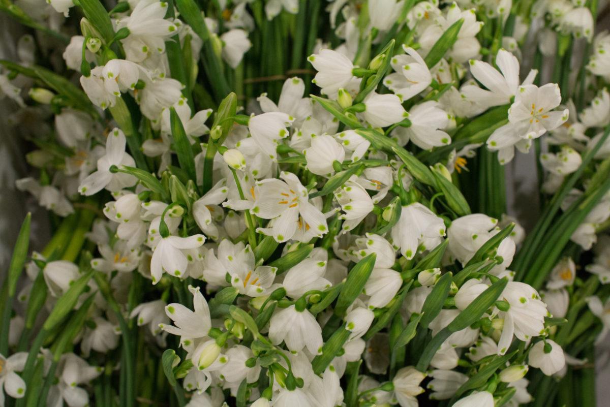 New Covent Garden Flower Market February 2016 Market Report Flowerona Hr 2