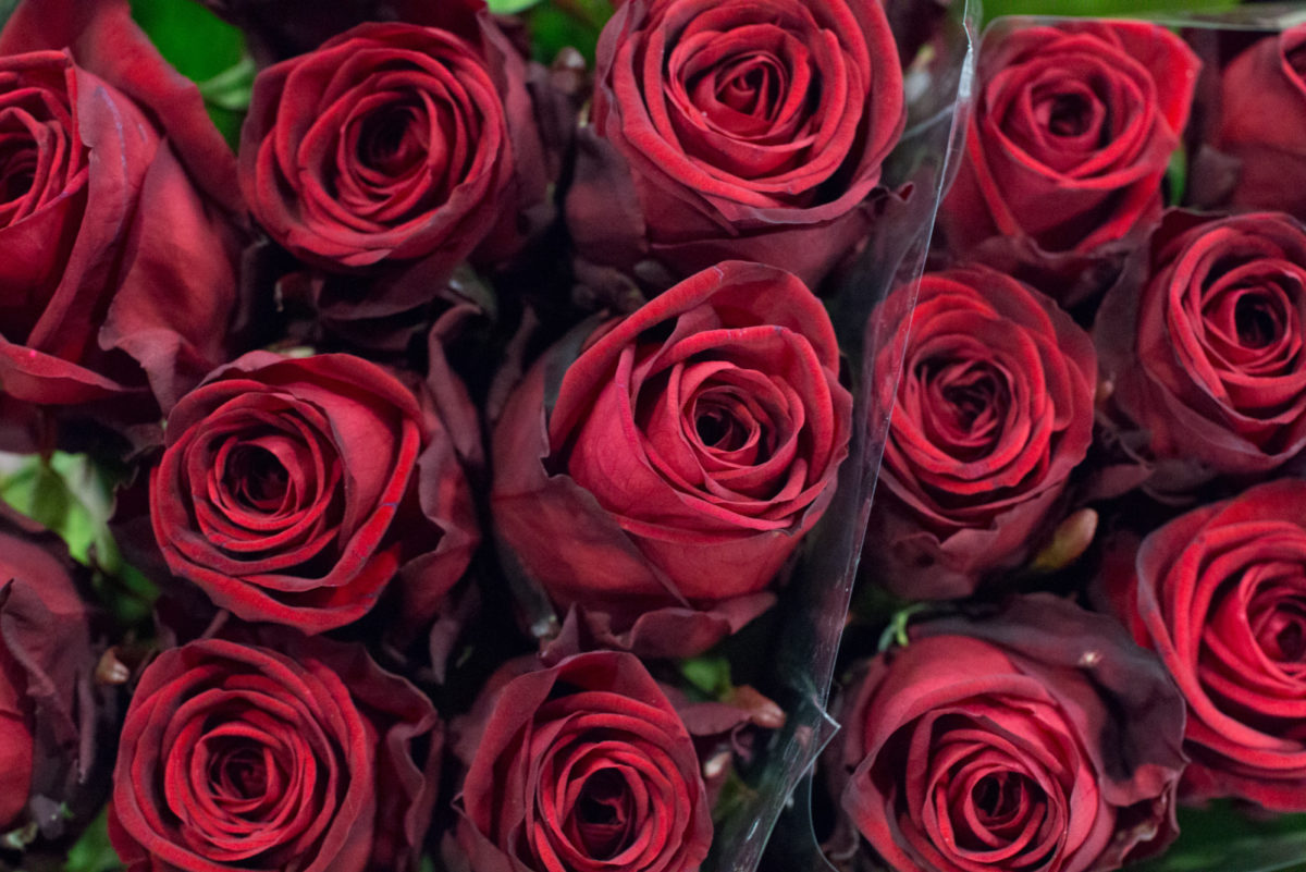 New Covent Garden Flower Market February 2016 Market Report Flowerona Hr 5