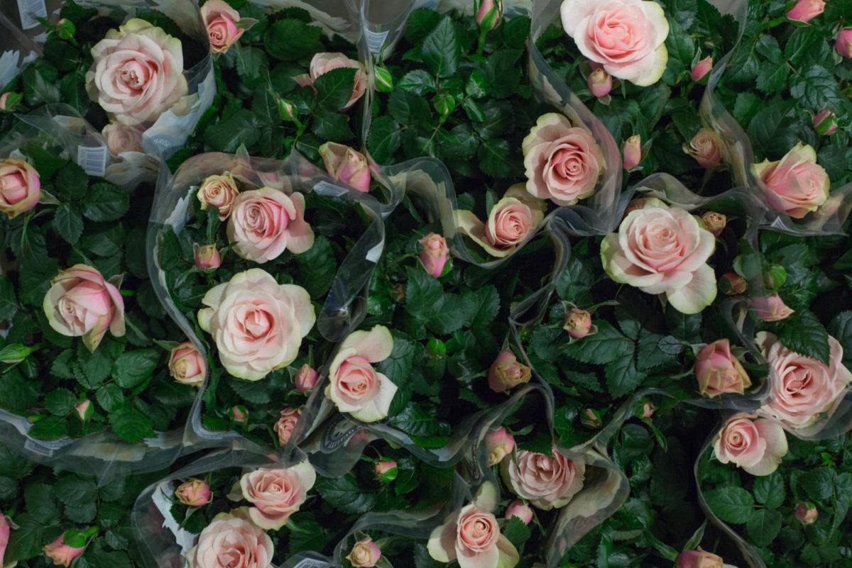 New Covent Garden Flower Market February 2017 Market Report Flowerona High Res Ôçÿ Magnolia Kordana Rose Plants At Quality Plants