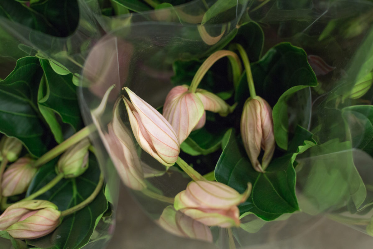 New Covent Garden Flower Market February 2017 Market Report Flowerona High Res Medinilla Plants At Quality Plants