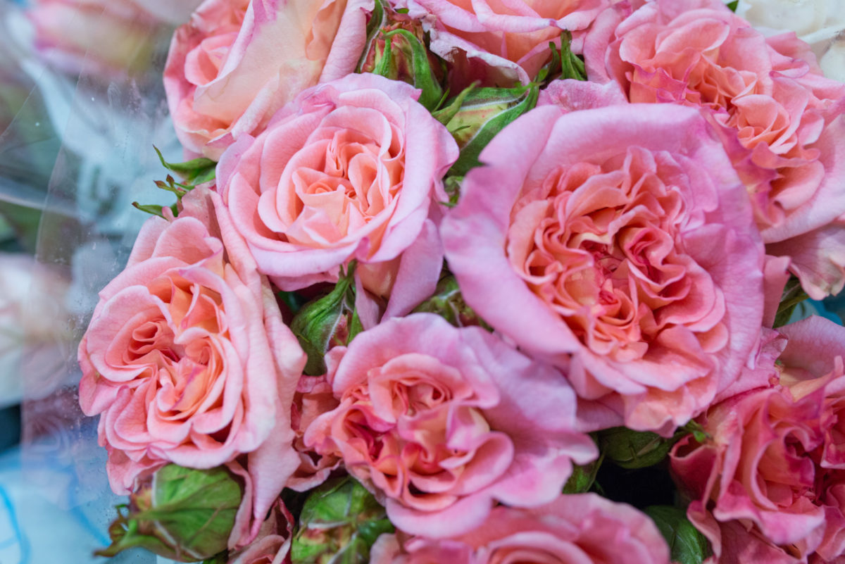 New Covent Garden Flower Market Flower Market Report June 2017 Rona Wheeldon Flowerona British Augusta Louise Roses At Zest Flowers