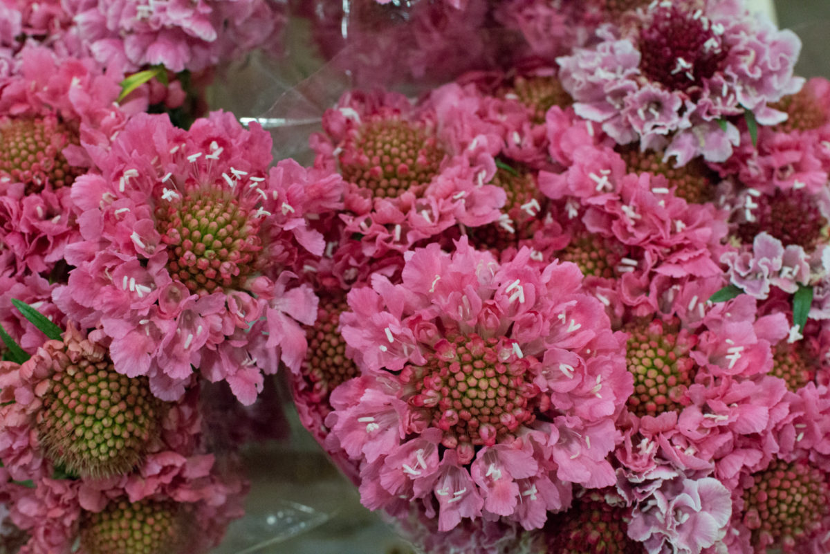 New Covent Garden Flower Market Januaryôçö2016 Market Report Flowerona Hr 10