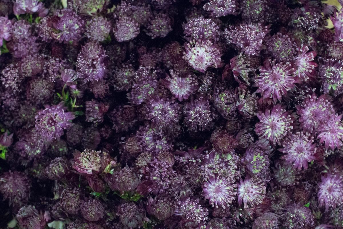 New Covent Garden Flower Market Januaryôçö2016 Market Report Flowerona Hr 16