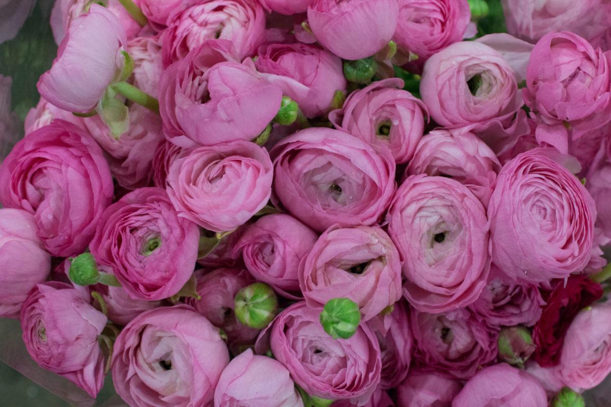 New Covent Garden Flower Market Januaryôçö2016 Market Report Flowerona Hr 8