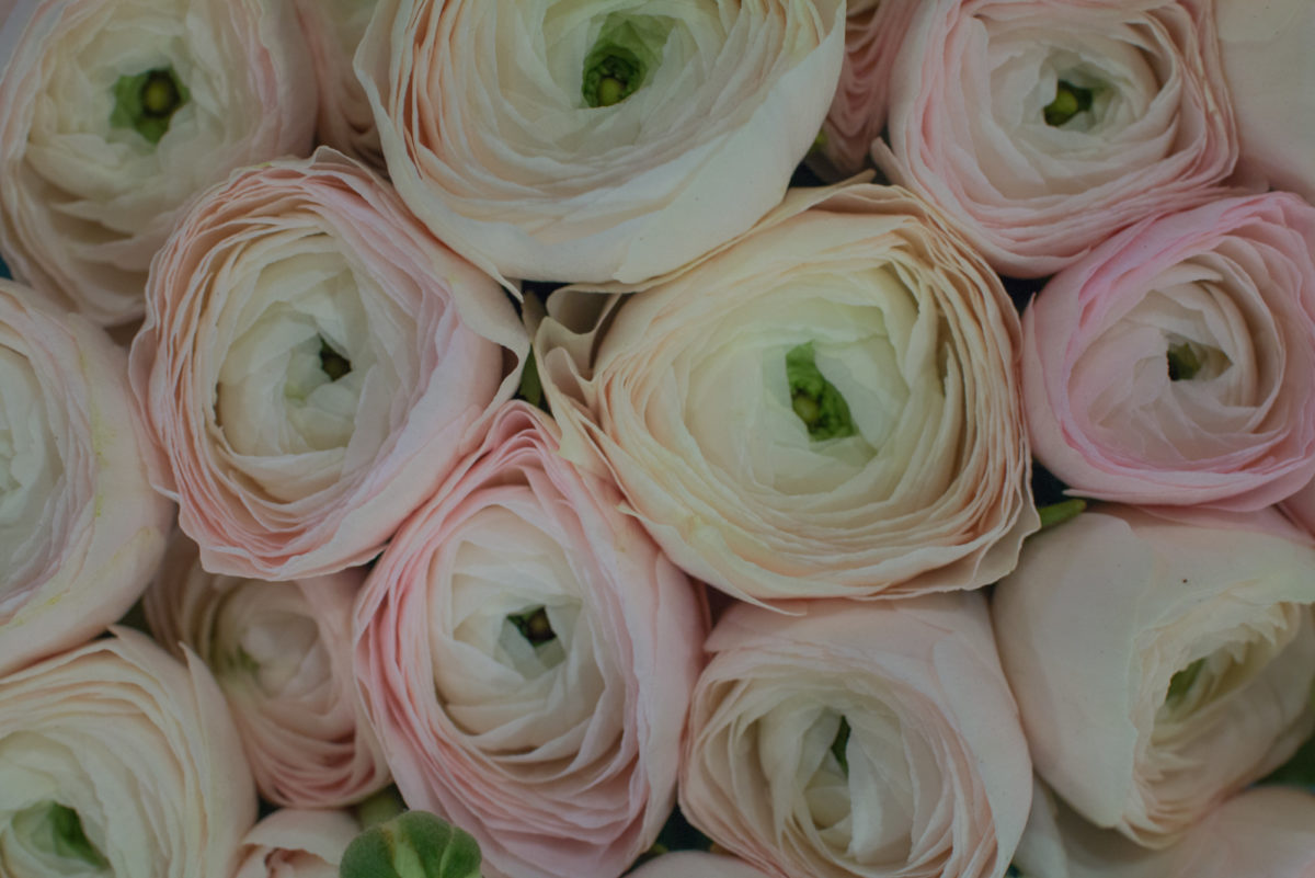 New Covent Garden Flower Market January 2017 Market Report Flowerona A 40