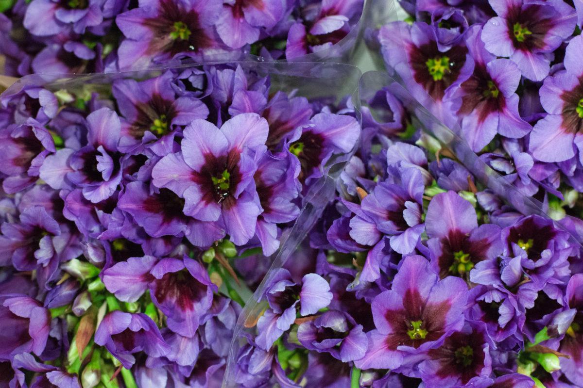 New Covent Garden Flower Market July 2015 Market Report Flowerona Hr 12