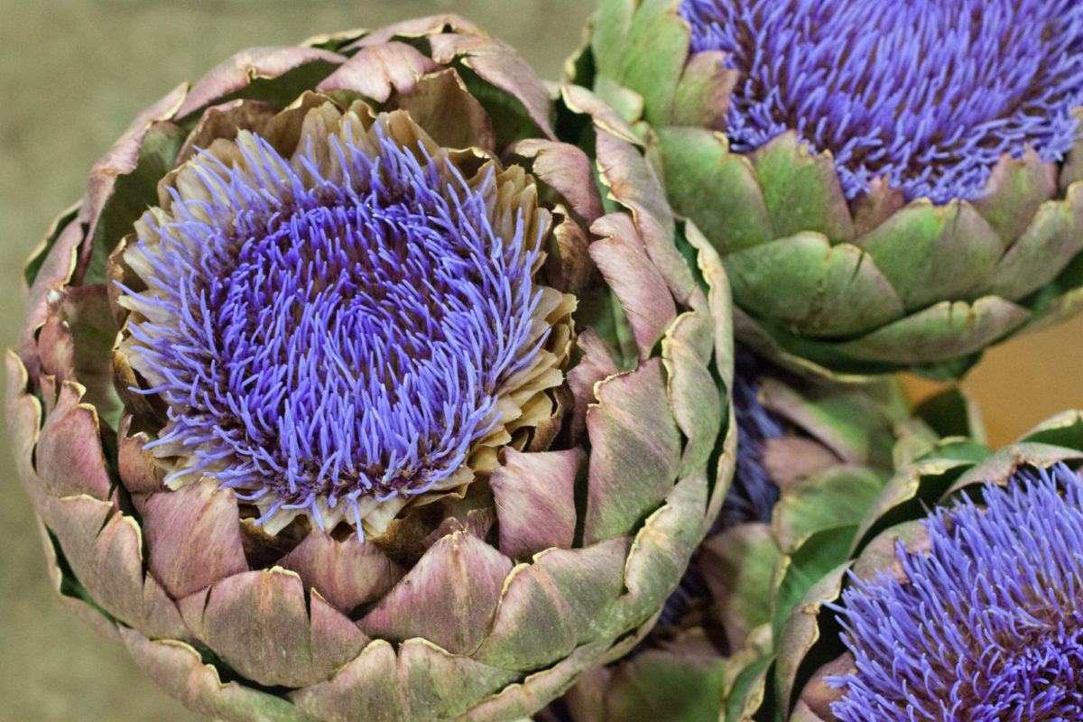 New Covent Garden Flower Market July 2015 Market Report Flowerona Hr 13