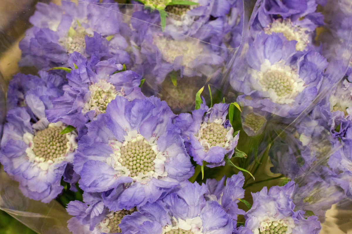 New Covent Garden Flower Market July 2015 Market Report Flowerona Hr 14