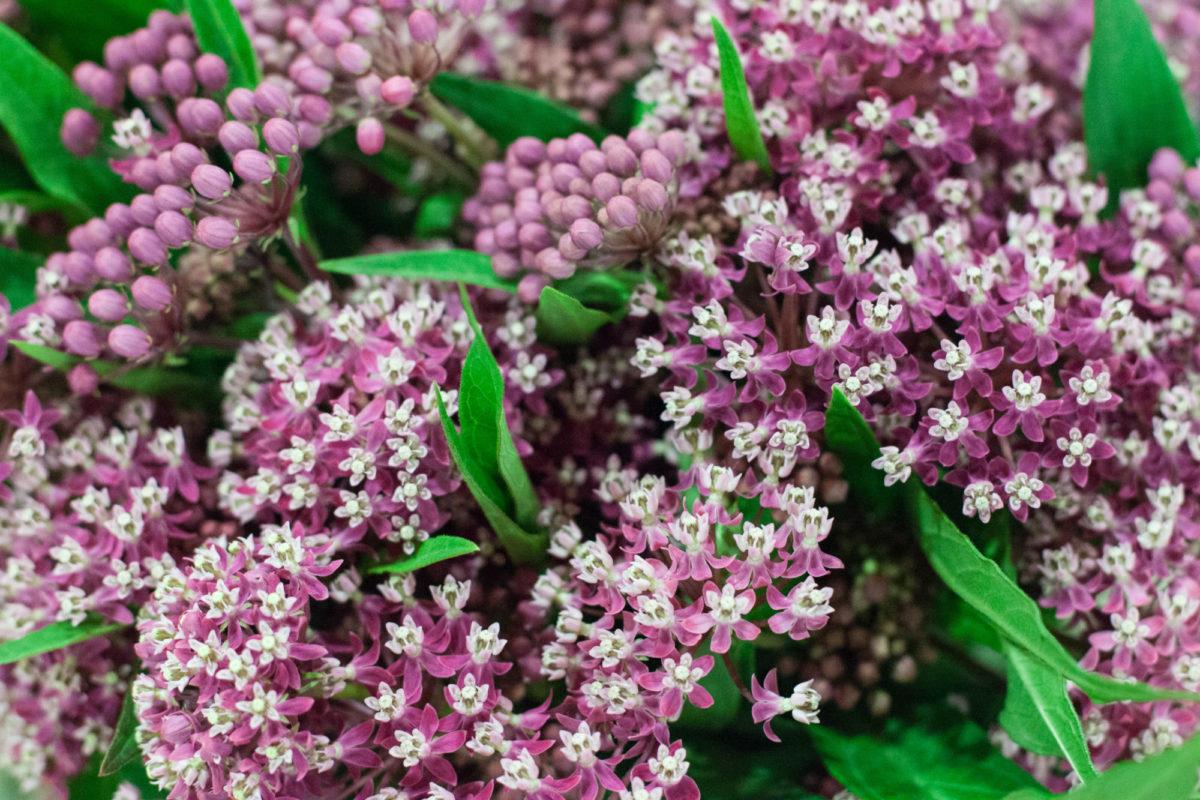 New Covent Garden Flower Market July 2015 Market Report Flowerona Hr 16