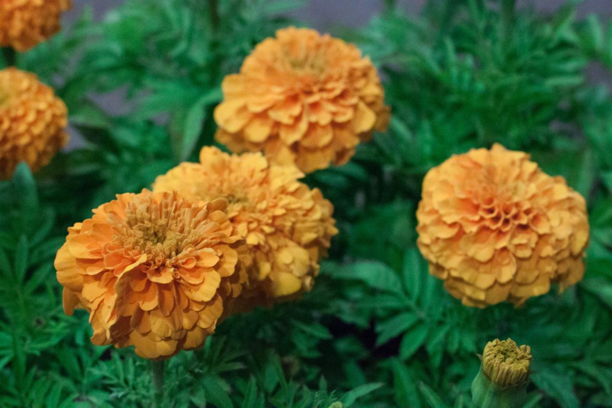 New Covent Garden Flower Market July 2015 Market Report Flowerona Hr 21