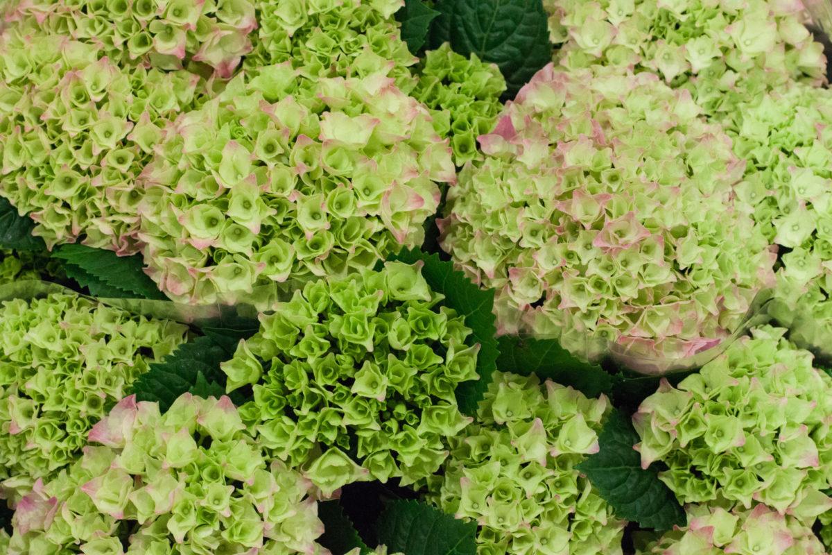New Covent Garden Flower Market July 2015 Market Report Flowerona Hr 24