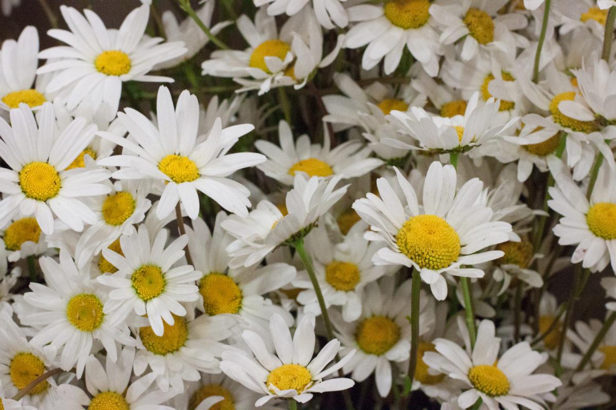New Covent Garden Flower Market July 2015 Market Report Flowerona Hr 7