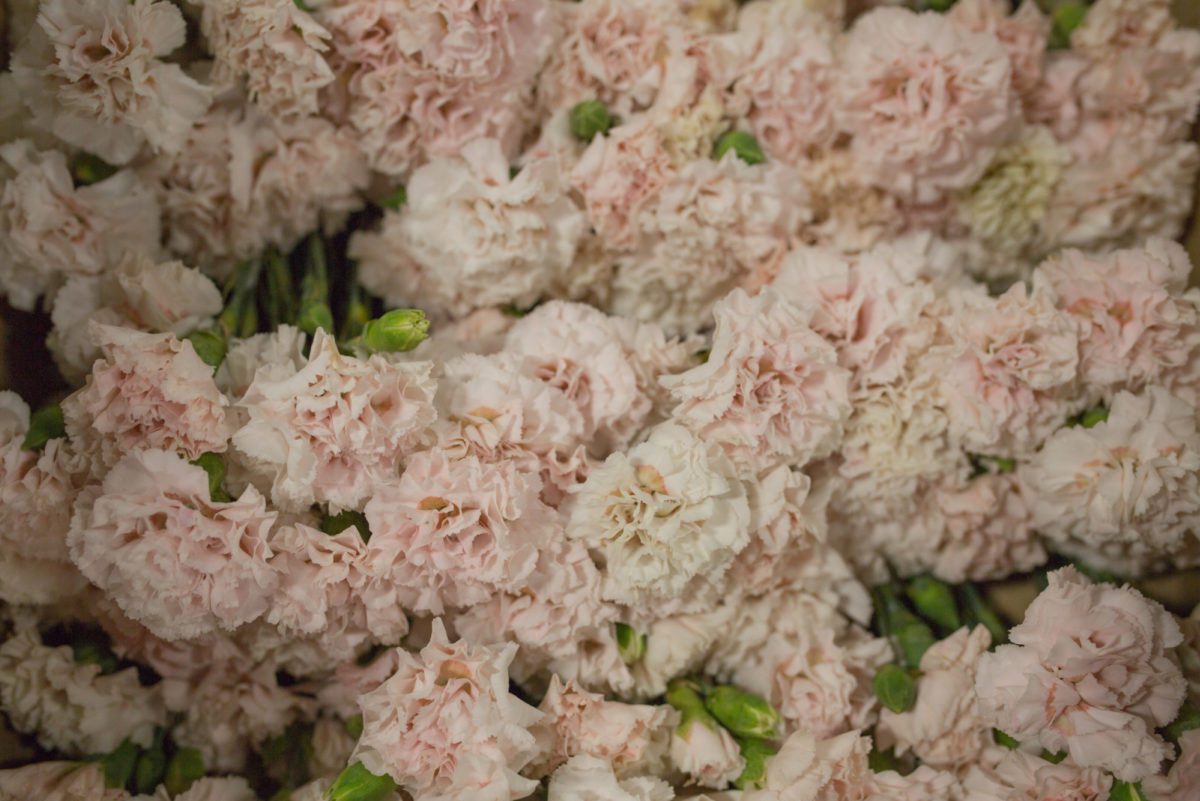 New Covent Garden Flower Market July 2017 Flower Market Report Rona Wheeldon Flowerona British Pinks At Pratley