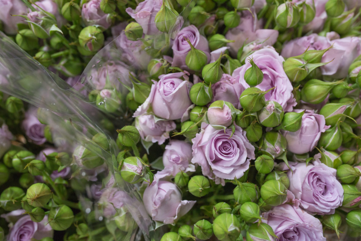 New Covent Garden Flower Market July 2017 Flower Market Report Rona Wheeldon Flowerona Sterling Sensation Spray Roses At Dennis Edwards Flowers