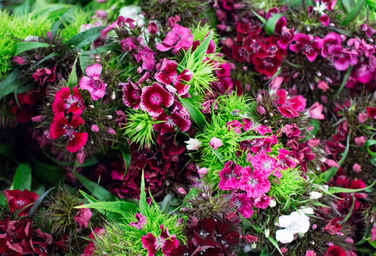 New Covent Garden Flower Market June 2016 Market Report Flowerona Hr 7A