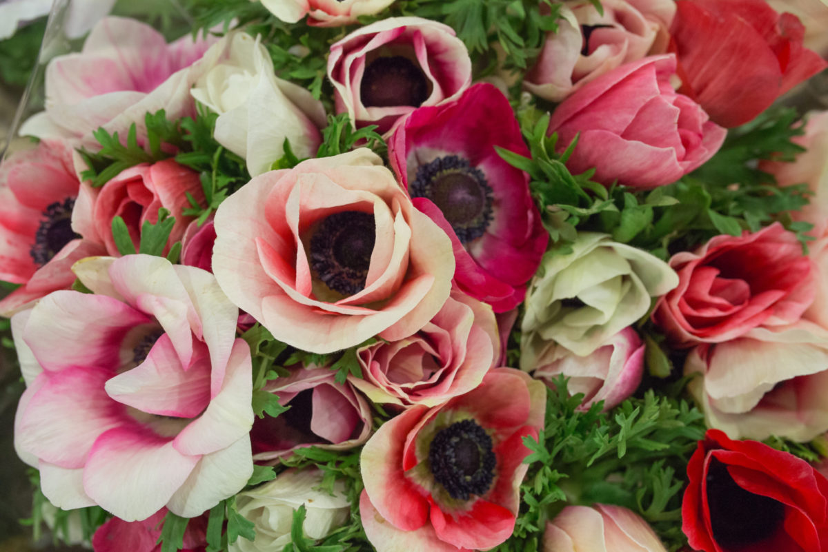 New Covent Garden Flower Market March 2017 Market Report Rona Wheeldon Flowerona Anemone Mistral At S Robert Allen