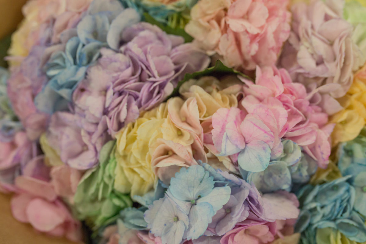 New Covent Garden Flower Market March 2017 Market Report Rona Wheeldon Flowerona Dyed Rainbow Hydrangeas At Dennis Edwards Flowers
