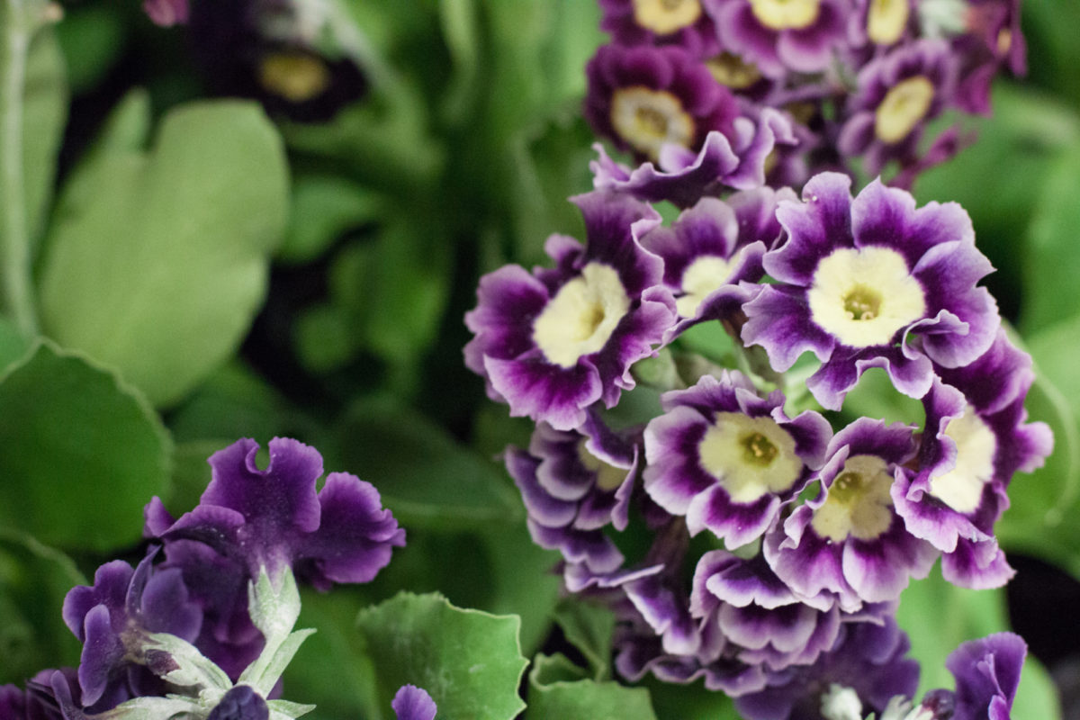 New Covent Garden Flower Market May 2015 Market Report Flowerona Hr 22