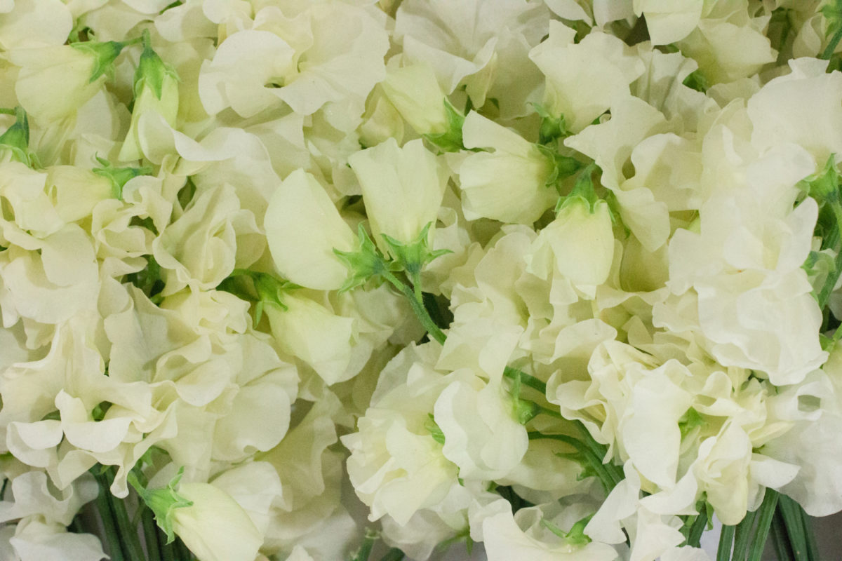 New Covent Garden Flower Market May 2015 Market Report Flowerona Hr 4