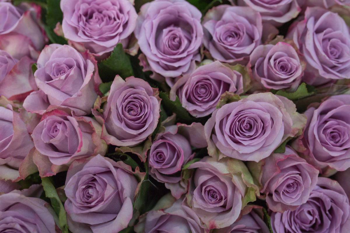 New Covent Garden Flower Market May 2017 Flower Market Report Rona Wheeldon Flowerona Ôçÿ Dancing Cloudsôçö Roses At R French Sons