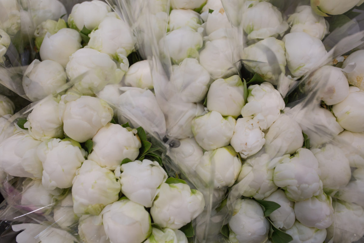 New Covent Garden Flower Market May 2017 Flower Market Report Rona Wheeldon Flowerona Ôçÿ Madame Claude Tainôçö Peonies At Zest Flowers