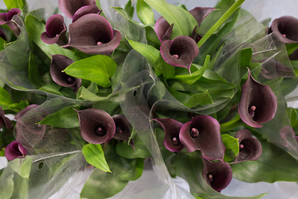 New Covent Garden Flower Market May 2017 Flower Market Report Rona Wheeldon Flowerona Zantedeschia Plants At Quality Plants