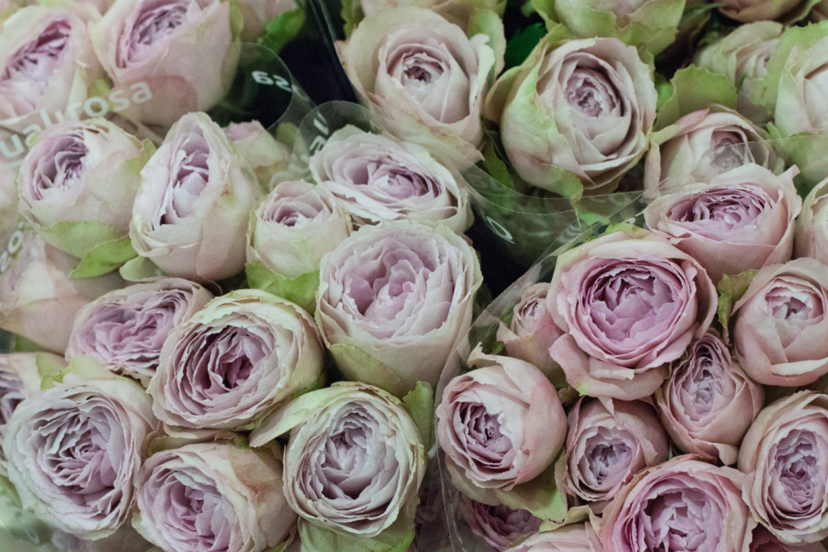 New Covent Garden Flower Market October 2015 Market Report Flowerona Hr 17