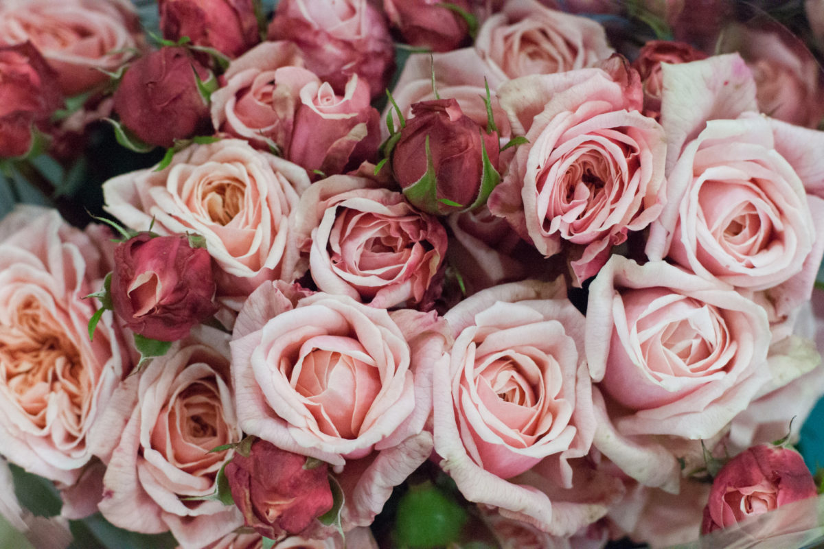 New Covent Garden Flower Market October 2015 Market Report Flowerona Hr 2