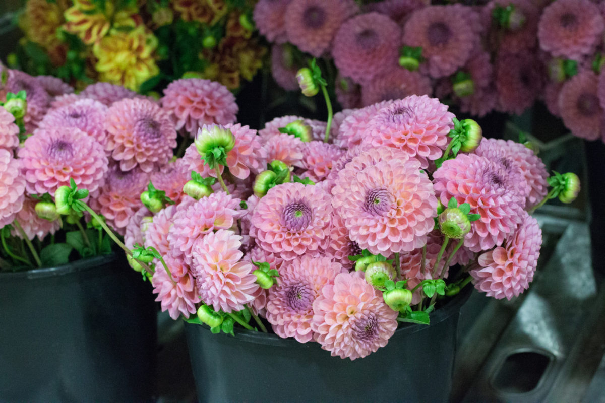 New Covent Garden Flower Market October 2015 Market Report Flowerona Hr 3